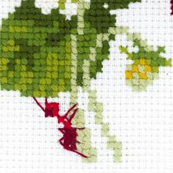 Cactus SA7737