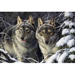 Infinite Universe WD2393