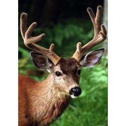 Wizardi 3D Papercraft Kit Dinosaur Tops Wasabi PP-1TPS-2WS