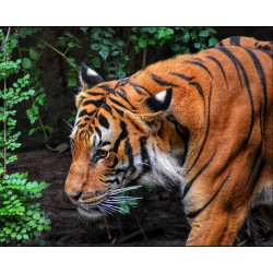 Cushion kits for embroidery 40/40cm SA99049