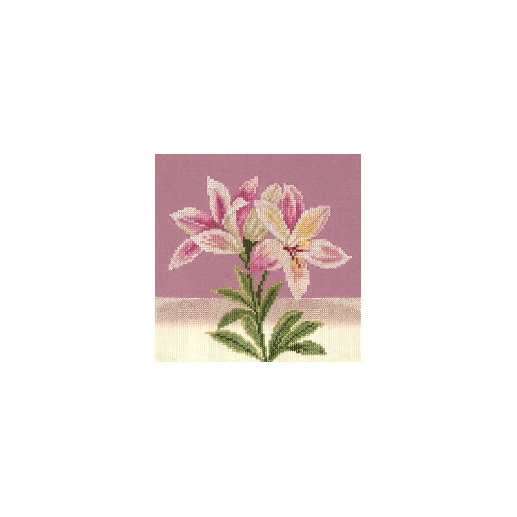 Rag Doll Kit Cat Tasia AM100041I