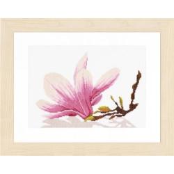 Irises SXBW5